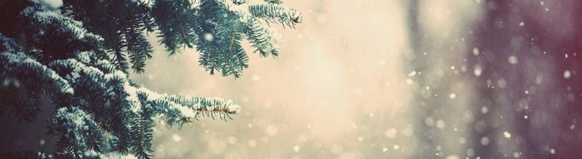 Winter Banner Image