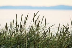 EBC New Hampshire Webinar: A Great Bay Estuary Update - An Assessment of the Permitting and Regulatory Impacts